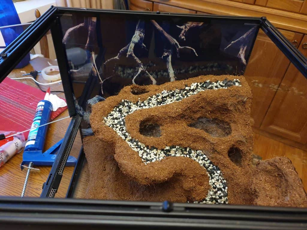 Background in paludarium can be seen in here.